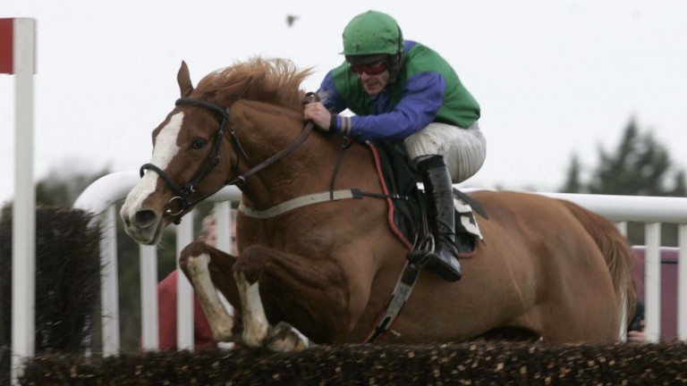 Thyne Again: Grade 1 novice chase winner who had distinctive white socks