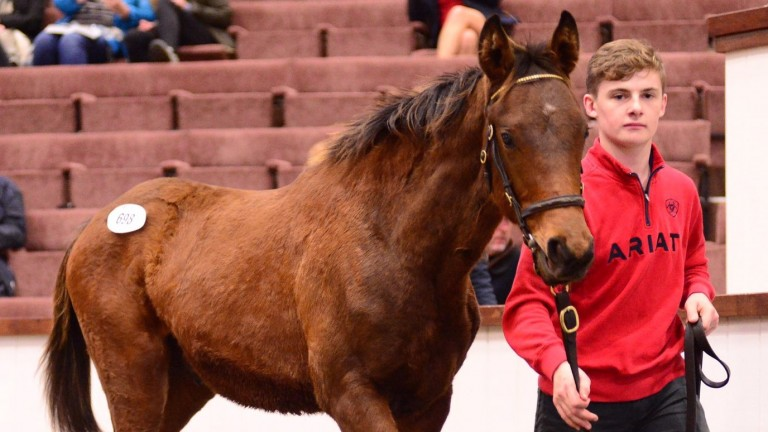 The brother to Briar Hill was the subject of plenty of bids at Tattersalls Ireland on Tuesday