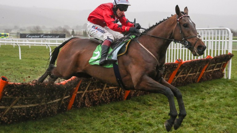 """The New One and Richard Johnson, who """"got on great last year"""" according to Nigel Twiston-Davies"""