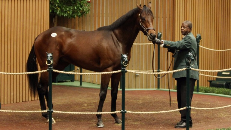 You're To Blame sells for $440,000 at the Keeneland November sale