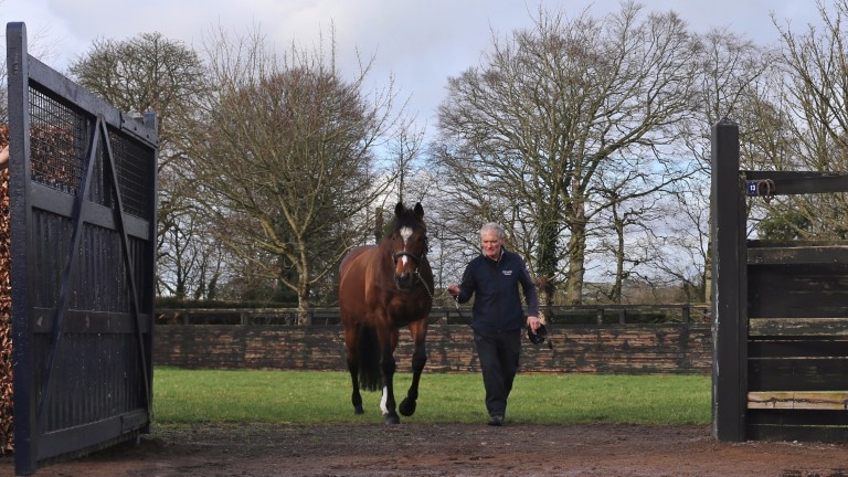 Galileo featured in the first two generations of the pedigrees of six Cartier award winners