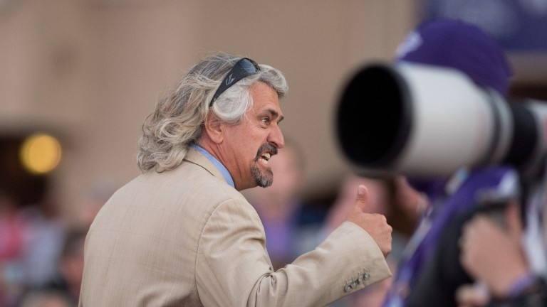 Steve Asmussen: will train Gun runner up until the Pegasus