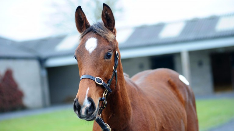 The Flemensfirth colt out of Lucky Fancy that sold for €75,000