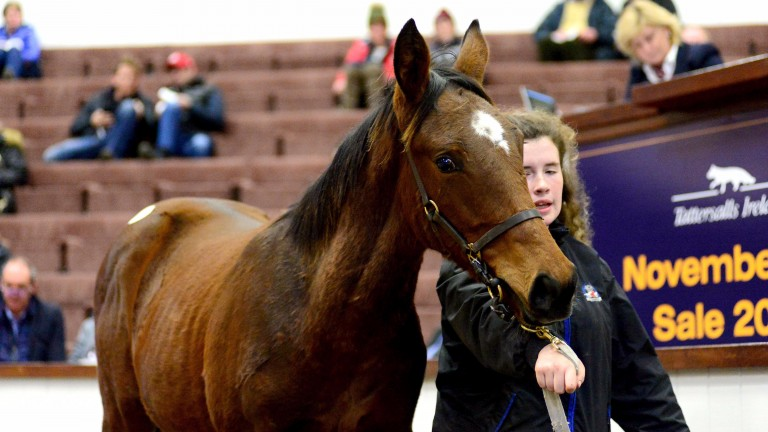 The Soldier Of Fortune colt snapped up by Timmy O'Byrne for €72,000