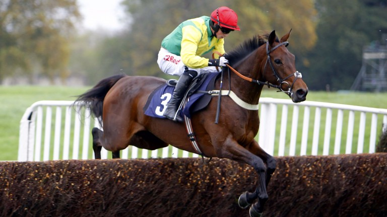 Finian's Oscar: was a fitting winner at Cheltenham