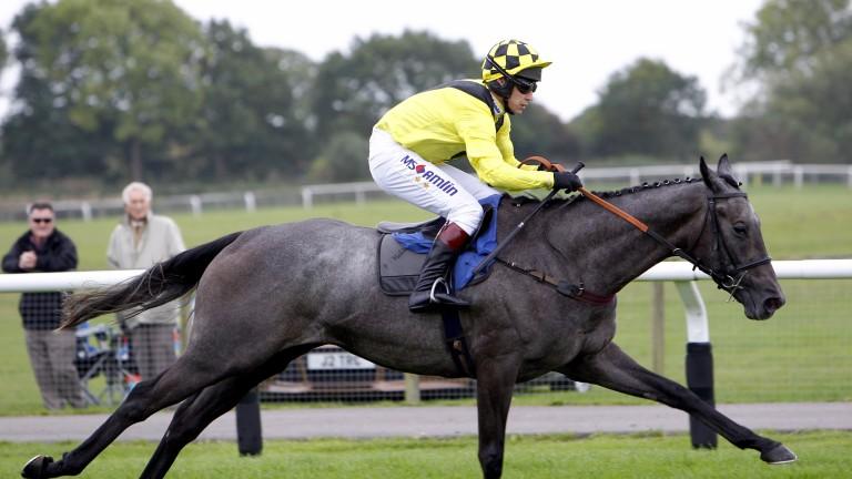 Gumball bids to extend his winning run at Cheltenham on Saturday