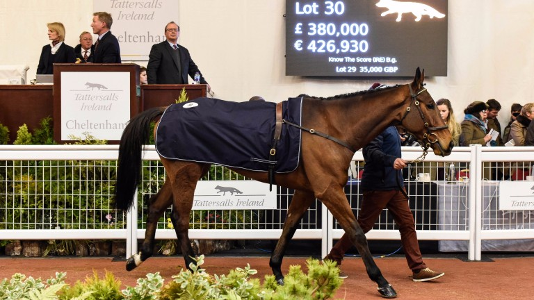 Lot 30: Know The Score in the Cheltenham ring before being knocked down to David Pipe for £380,000