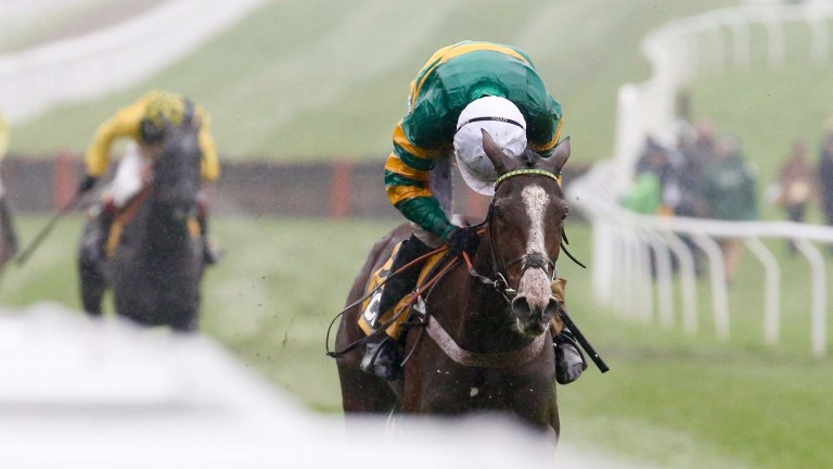 Apple's Shakira routs her rivals in the JCB Triumph Hurdle Trial at Cheltenham on Saturday