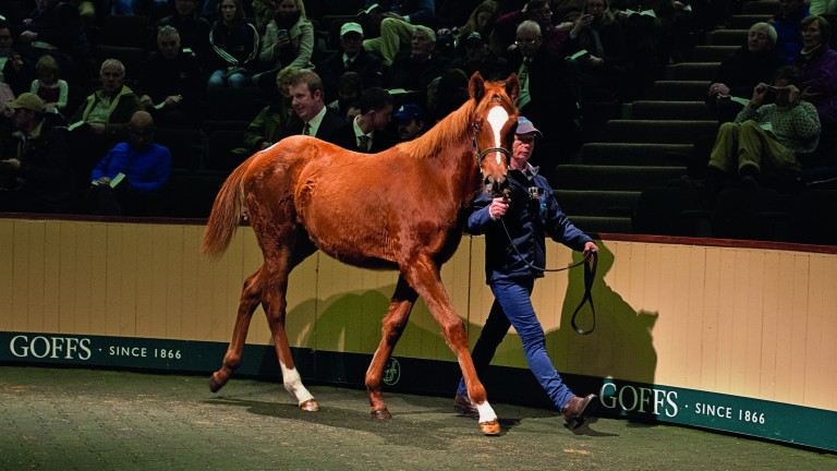 The Frankel filly out of Finsceal Beo in the Goffs ring