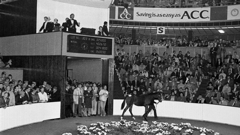 The Shergar foal who would become Authaal goes through the ring at Goffs as a foal