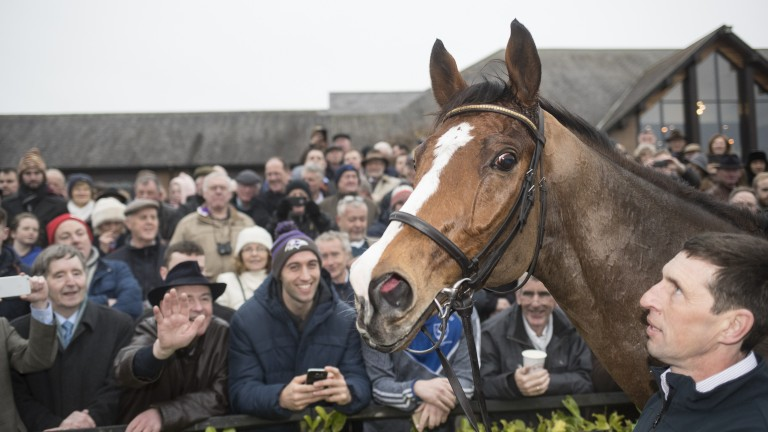 Faugheen looks a picture in the winner's enclosure after a mighty return to action