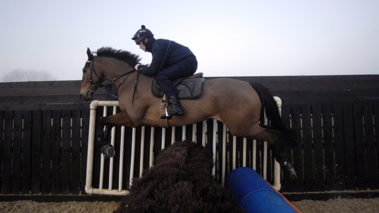 Ruby Walsh and Denman in full flow in the sand schooling ring at Paul Nicholls' yard in Ditcheat