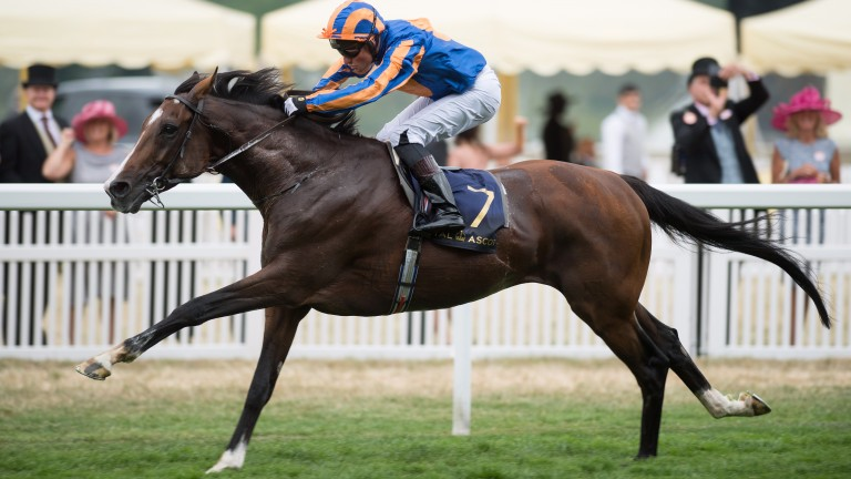 Idaho will be Aidan O'Brien's first runner in the Japan Cup since 2010