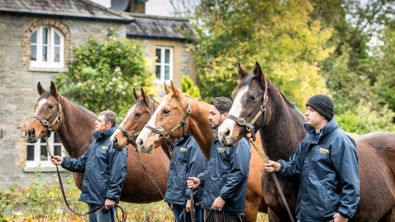 The Ballymacoll Stud mares bound for the Goffs Breeding-Stock Sale strike a pose at the famed nursery