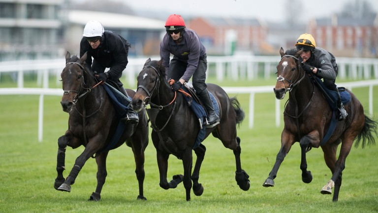 Charli Parcs (centre) working with Buveur D'Air (left)