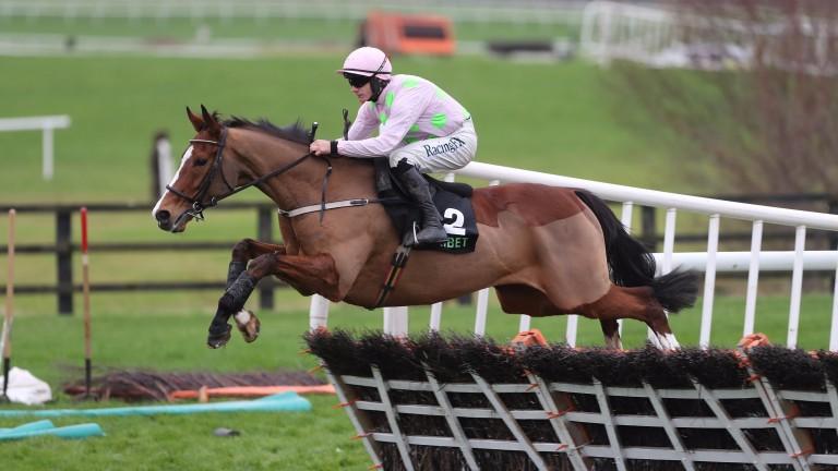 Faugheen: landed the Liberty Insurance Novice Hurdle at Limerick's Christmas Festival in 2013