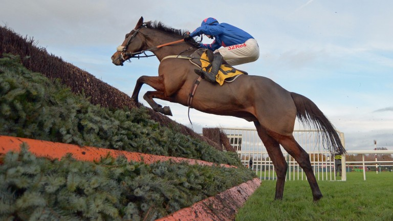 Cue Card: aiming for a third Ascot Chase on Saturday