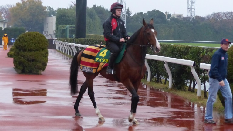 TJ Comerford leads Idaho out ahead of his gallop on the turf track in Tokyo