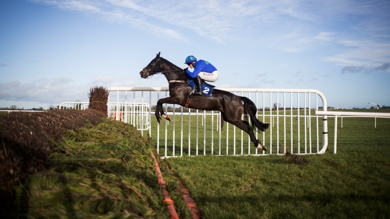 Spring in her step: beginners' chase runner-up Asthuria, trained by Willie Mullins, puts in an impressive jump under Paul Townend