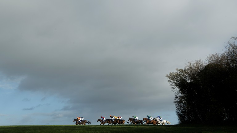 Blue sky thinking: runners in the 2m4f handicap hurdle, won by grey mare Daytime Ahead (in rear), on their final circuit