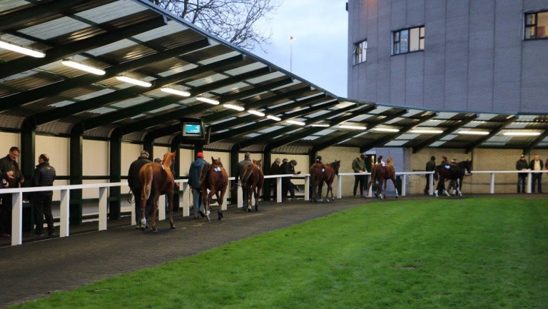 First-crop progeny of Gutaifan were popular at Goffs