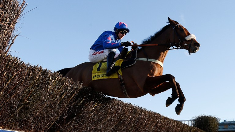 Cue Card: the popular 12-year-old will try and win a third Ascot Chase