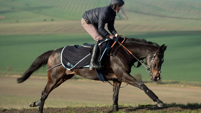 Altior: the Arkle winner is ready to resume cantering