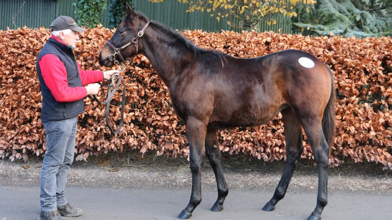 The Kingston Hill colt who topped the final day of the Goffs November Sale on Sunday at €26,000