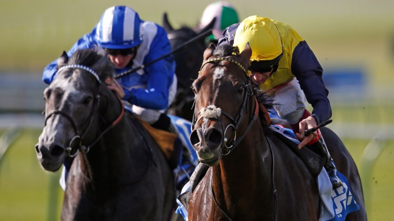 Cable Bay (yellow cap) takes out the 2015 Dubai Challenge Stakes at Newmarket