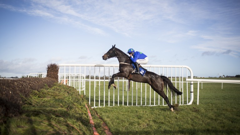 Asthuria: could be the pick of the Willie Mullins runners