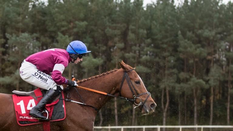Samcro: unbeaten in five rules starts
