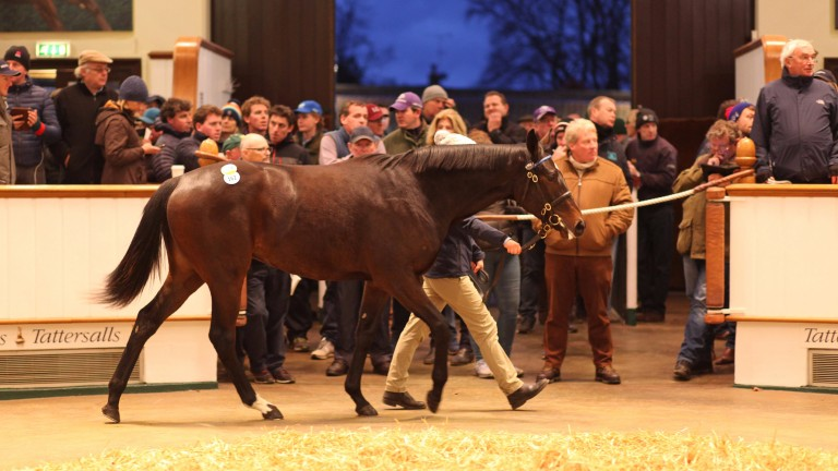 Lot 162: the Kodiac half-sister to Barney Roy in the Tattersalls ring before going the way of David Redvers for 400,000gns