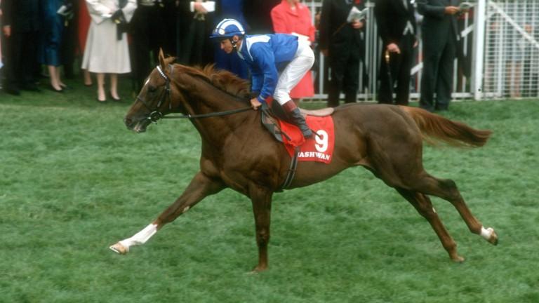 Nashwan: an outstanding champion and Derby winner owned by Sheikh Hamdan