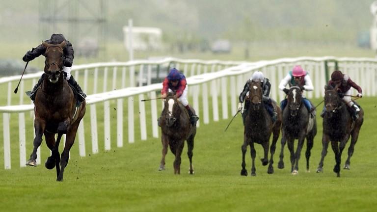 Hawk Wing: tears apart the 2003 Lockinge Stakes field