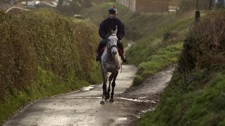 Rooster Booster and work-rider Leighton McGuiness at Philip Hobbs's Sandhill stables in Bilbrook in January 2004