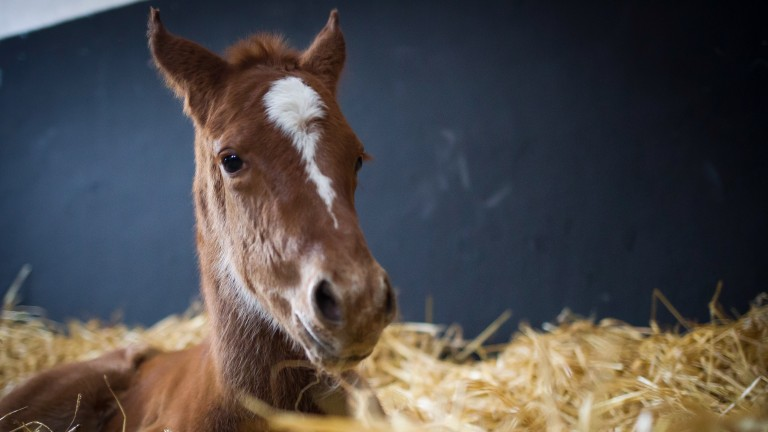 Foals will need to be registered within 30 days under new BHA guidelines