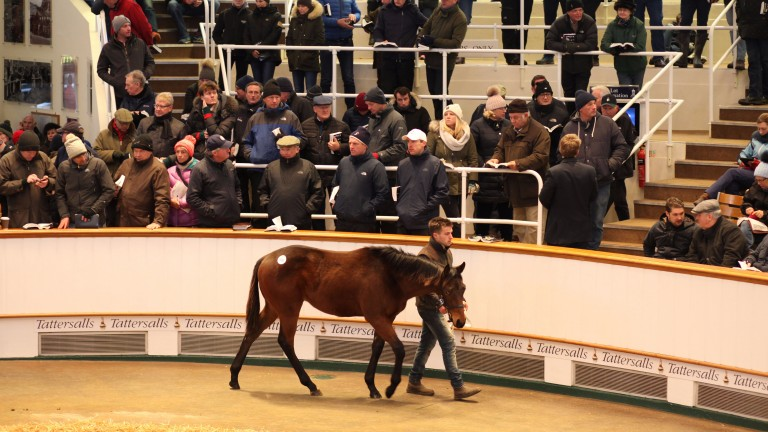 Lot 646: the Kodiac colt bought by Sun Bloodstock for 210,000gns from Meadowlands Stud