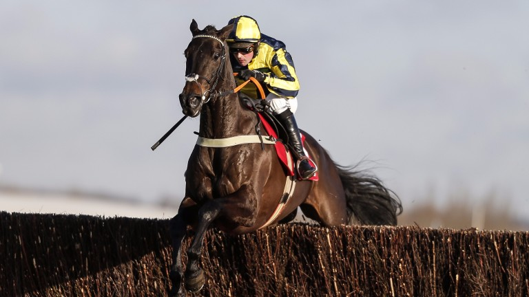 Willoughby Court: will not run at the Cheltenham Festival