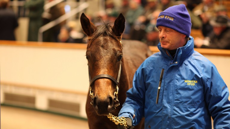 Lot 992: the Dubawi half-sister to Jack Hobbs is led around the Tattersalls ring before Godolphin secured the filly for 750,000gns