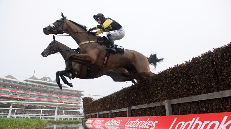 Elegant Escape: the Colin Tizzard runner looks value at 33-1 for the National Hunt Chase