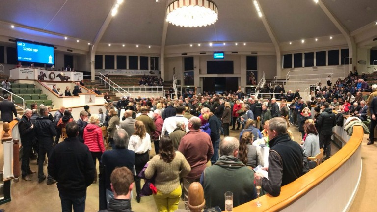 Tattersalls: a packed sales ring for the charity auction at Park Paddocks on Sunday evening
