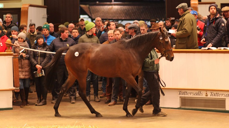 Intricately selling in the ring for 1,700,000gns at the Tattersalls December Mares Sale on Monday