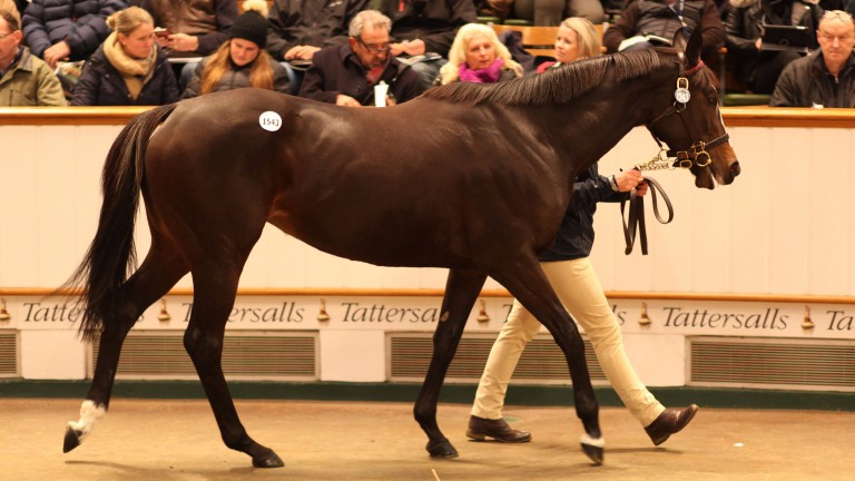 Prize Exhibit: the daughter of Showcasing was snapped up by Barronstown Stud for 775,000gns
