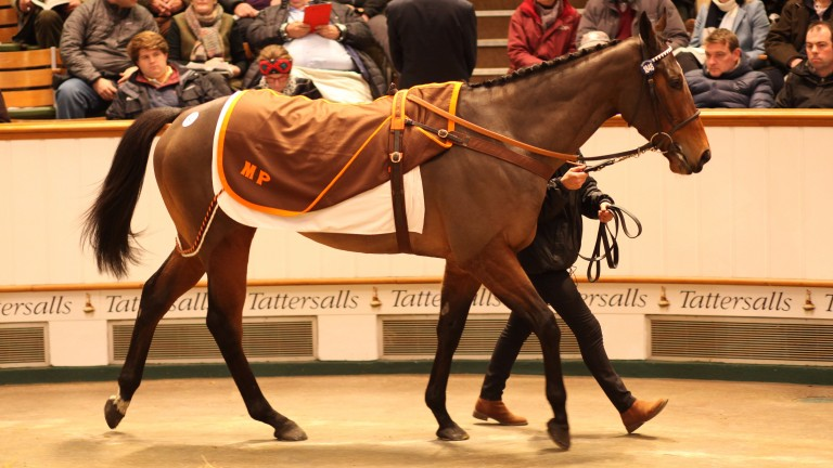 Marsha: smashed the European auction record for a broodmare when selling for 6,000,000gns to MV Magnier
