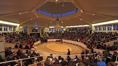 The packed Park Paddocks sales ring during the Ballymacoll Stud dispersal