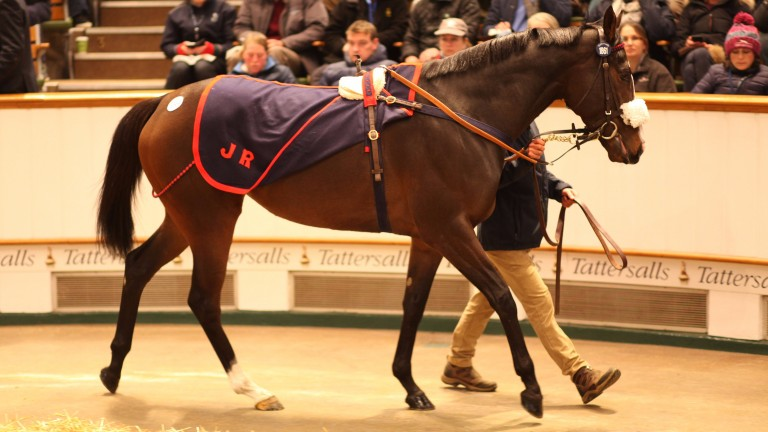 Quiet Reflection: dual Group 1 winner picked up by Blandford Bloodstock and MV Magnier for 2.1 million guineas
