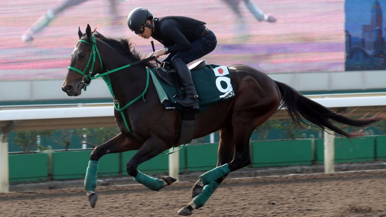Kiseki: five-year-old ran a mighty race when second to Almond Eye in last year's Japan Cup