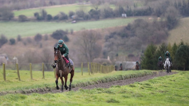 Blaklion (Fay Shulton) on the gallops: he is favourite for Saturday's Becher Chase