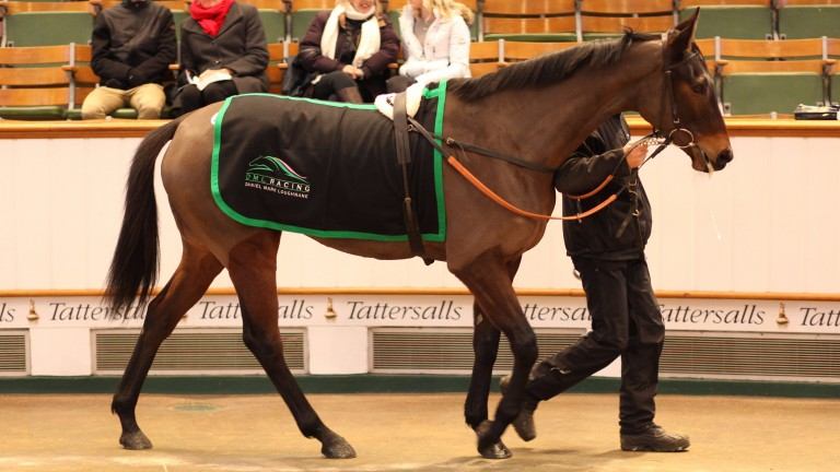 Angelical: selling for 35,000gns towards the end of the session at Tattersalls on Thursday