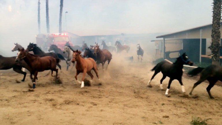 Terrified horses gallop from San Luis Rey Downs during December's fire